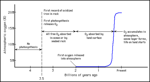 O2 concn over time.png
