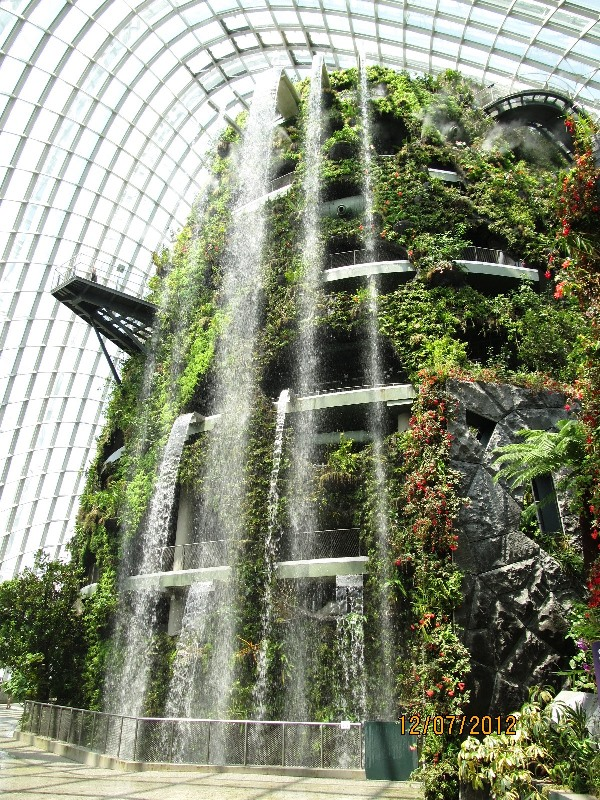 Singapore cloud forest mountain.jpg