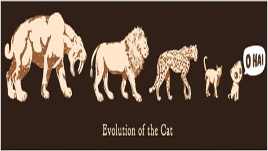 evolution of the cat.jpg