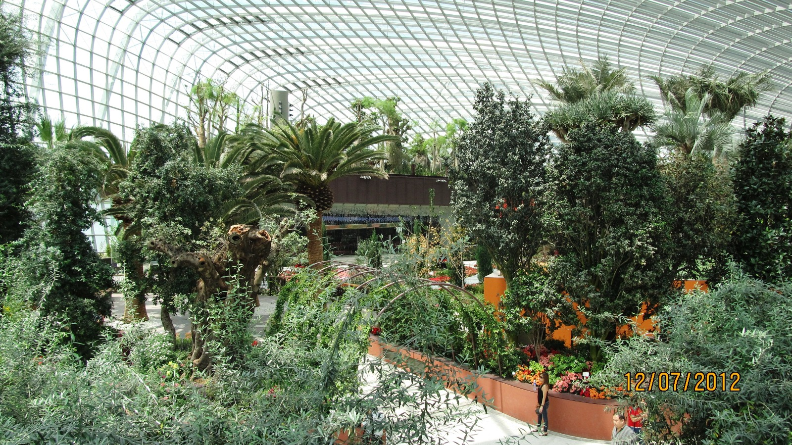 singapore - flower dome forest look.jpg
