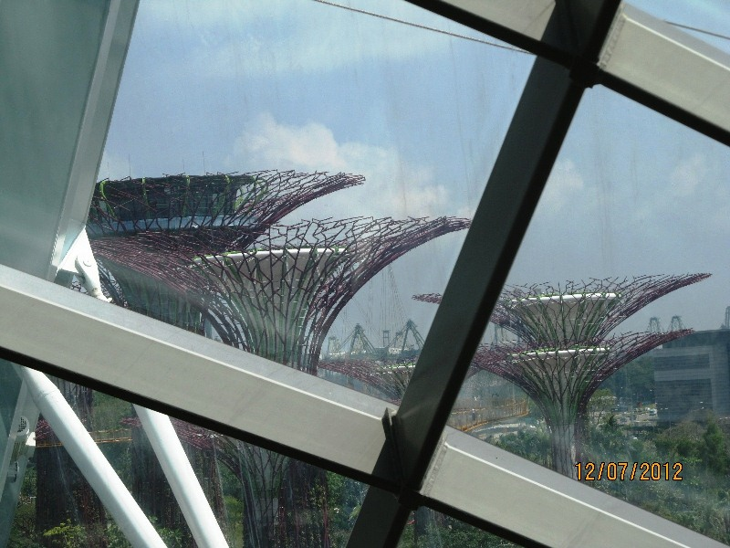singapore supertrees from dome.jpg