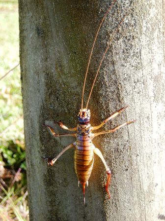 Weta resized for web.jpg